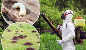 Уничтожение садовых вредителей